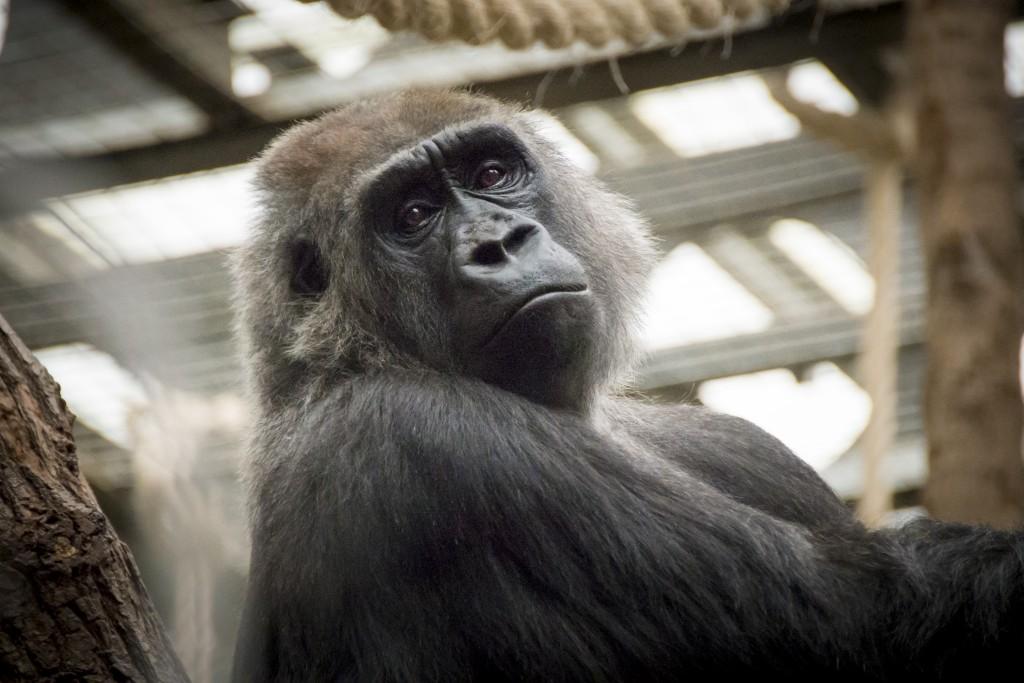 london zoo 010515_0146